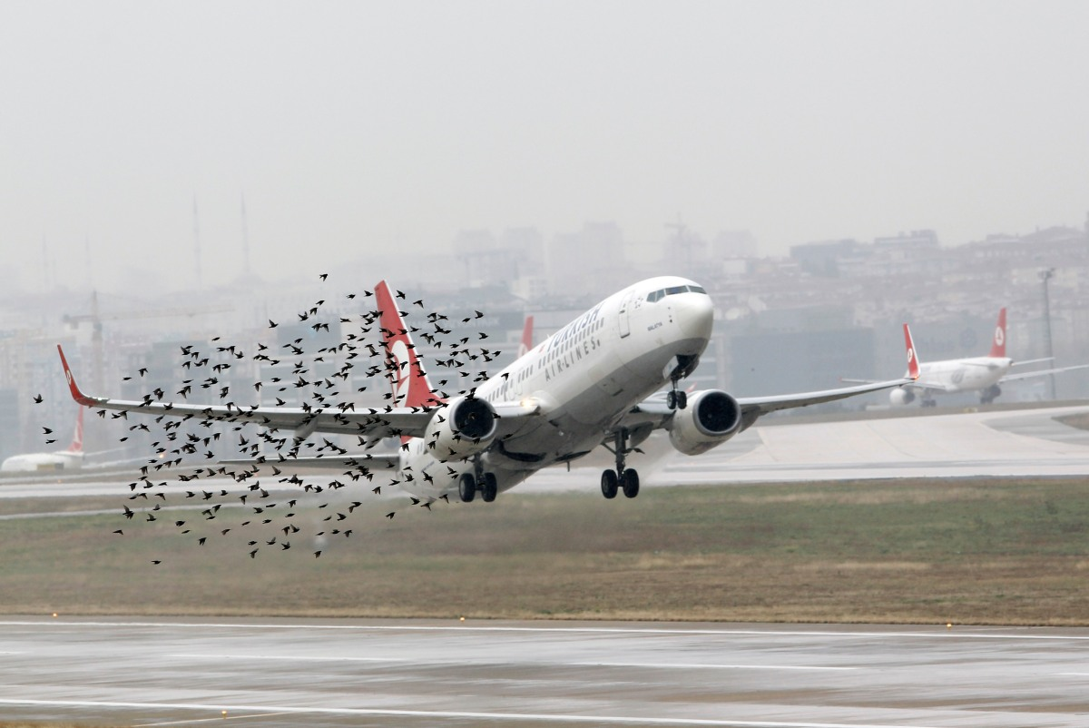 The Interesting Way One Airport Is Stopping Birds From Hitting Planes During Takeoff
