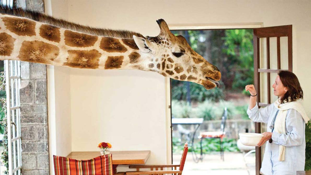 Bet You Didn't Think You Could Have Breakfast With A Giraffe, Did You?