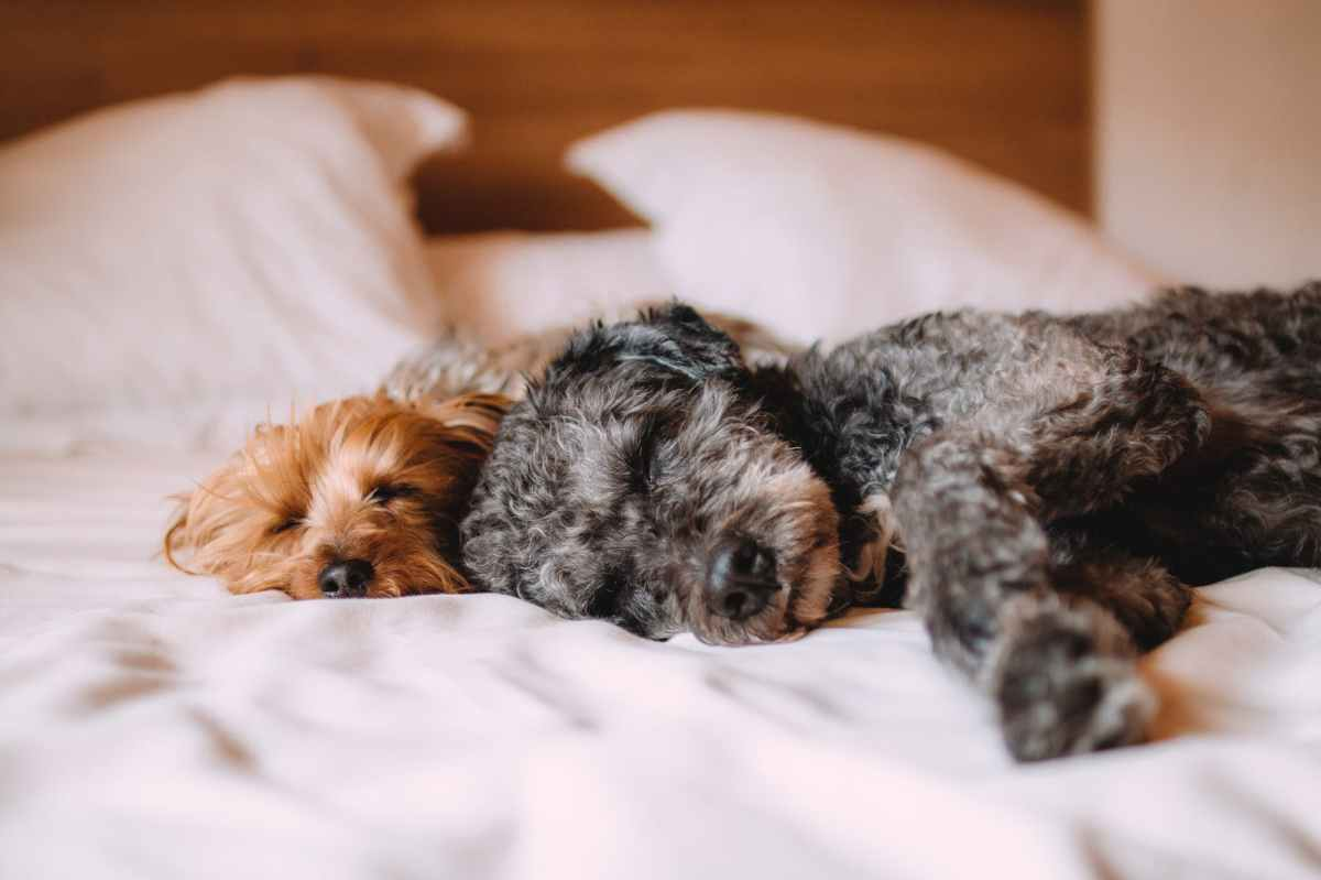 What To Do With Your Pet(s) If You Love ToTravel