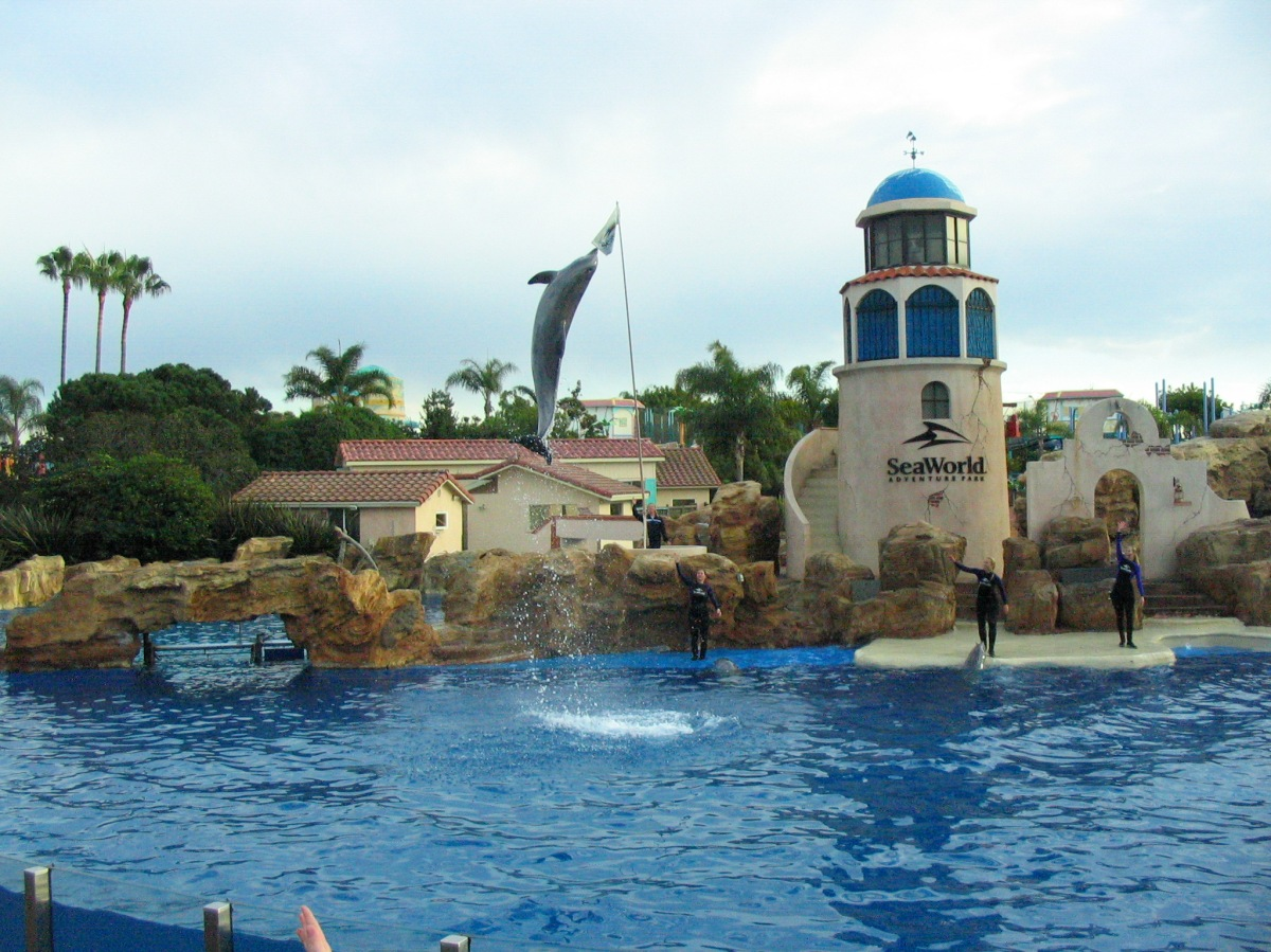 Sea World's New Paradise Nights Dinner & Dolphin Show at DiscoveryCove