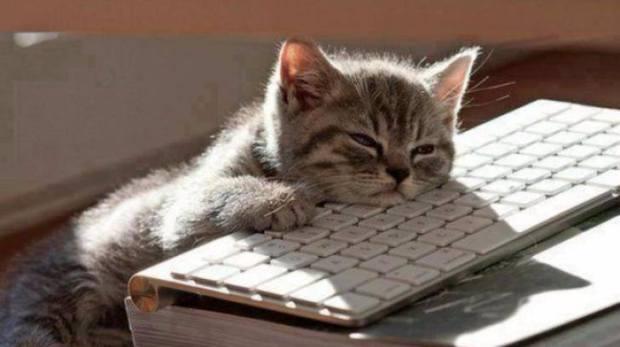 lazy cat keyboard