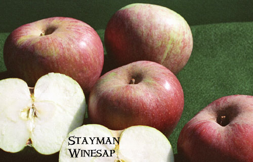 stayman_winesap